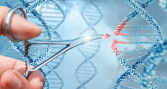 Die CRISPR/Cas-Methode entfernt unerwünschte DNA-Abschnitte