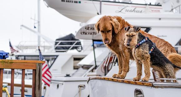 Erfolg mit Franchise und Hunden - Fressnapf