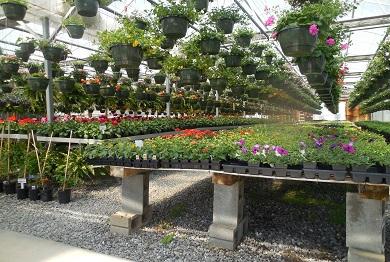 Gärtnerei kaufen