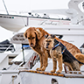 Erfolgreich mit Hundefutter: Franchise-Unternehmer Torsten Toeller
